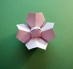 Step by Step Origami flower Instructions | ... glory origami ... | 227x240