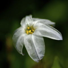 White levitation (shinichiro*) Tags: flower macro japan nikon d200 crazyshin 2007 1on1 aroundhome naturesfinest 1on1flowers 1on1nature