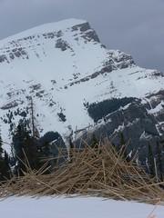 When Bamboo goes bad (Photo Twister) Tags: snow canada ski skiing alberta banff sunshinevillage