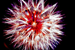 Explosion 3564 (casch52) Tags: red 20d clock canon photo thankyou view anniversary year explosion firework dandelion photograph views sparkler supershot explorer453 familygetty