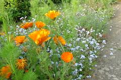 Surrey Spring Flowers #1
