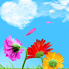 Seduction (mactastic) Tags: flowers blue sky love colors daisies catchycolors square hearts spring flora colorful heart rosa peaceful gerbera serenity daisy serene gerber flore gerberadaisy mactastic
