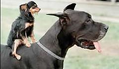 Dog Riding a Dog