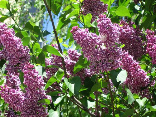 Spring Fling Caroll Gardens