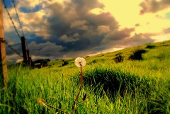 Feeling lonely (Nicolas Valentin) Tags: green clouds fence scotland farmland dandelion abigfave superaplus aplusphoto