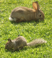 Wee baby bunny and teeny baby ground squirrel. (Eleventh Earl) Tags: california friends party music baby cute bunnies garden fun furry squirrel squirrels funny babies eating weekend may olympus bbq booze laughter 12th 2007 evolt wii e500