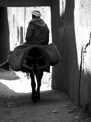 (Monia Sbreni) Tags: africa people bw monochrome donkey persone morocco maroc marocco marruecos viaggi zagora marokko biancoenero moroccan marrocos asino tamegroute sfidephotoamatori moniasbreni