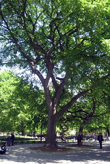 NYC - East Village: Tompkins Square Park - Har...