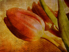 A touch of comfort (Gary*) Tags: flower macro art texture nature painting mood quality ps tulip naturesfinest lovephotography abigfave artlibre thegoldenmermaid