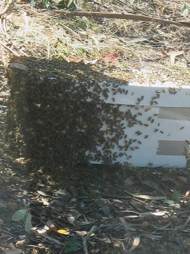 Swarm on box