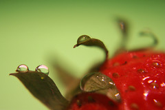 Strawberry (ukaaa) Tags: macro green wet water strawberry waterdrop sonia