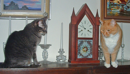 cats and clock