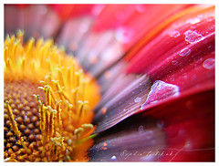 Secret life of plants (Ladida_photo) Tags: flowers color macro nature topf25 top20favorites photography topv333 colours vivid mostinteresting alive top20macro various shallowdof sophiatsibikaki macrofever littlegardenearth