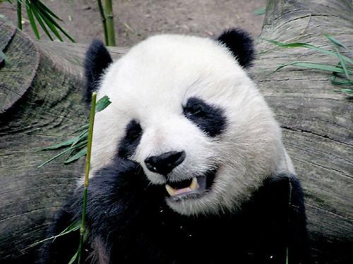 Bamboo Munchies