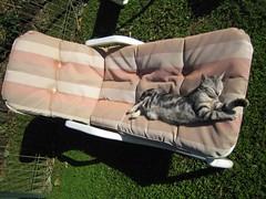 objet a prendre en vacances avec son chat