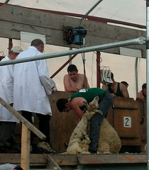 Sheep Shearing Competition (Ilja) Tags: ireland sheep clippers nakedmen tullamore nowool sheepshearingcompetition
