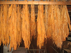Amish Tobacco