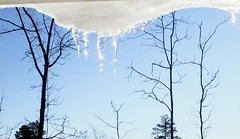Icicle in NC (lauralhb) Tags: raleigh fave icicle