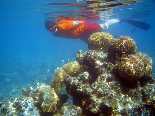 Buceo en las Islas Fiji