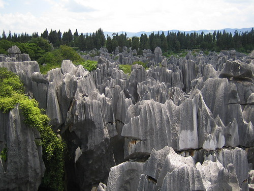 Stone Forest Horizon