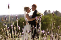 lavender filled frame (jen clix) Tags: wedding chaminade santacruz couple bride groom lavender