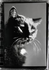 Portrait of a Nude Businesscat (* Sontheimer Pictures *) Tags: portrait black film businessman darkroom cat canon blackcat nude interestingness interesting feline shiny maurice trix formal manual portfolio wiskers sjs2 jls11 jrs7
