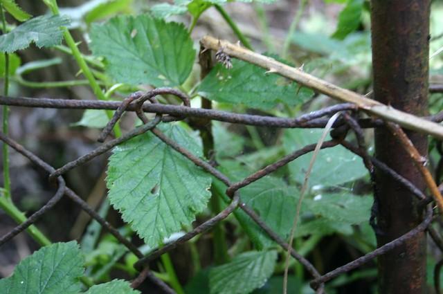 Waldspaziergang II: Rusty fence