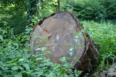 Waldspaziergang XVIII