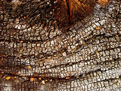Cellular Wood (Auntie P) Tags: wood log decay burnt charred texturesforlayers t4lagree