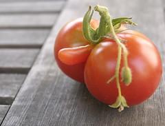 tom3 (smashz) Tags: tomatoes garden funny