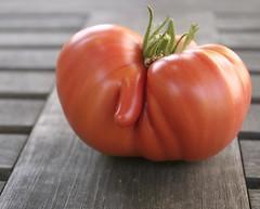 tom4 (smashz) Tags: tomatoes garden funny