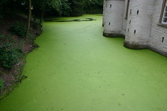 Green Alga 3213 (!sathyajith) Tags: karu germany athome zuhause grn green color alga castle ilovegreen