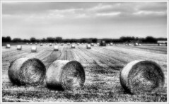 . Hay bales . 俵 . (3amfromkyoto) Tags: bw tractor monochrome field harvest hay bales 3amfromkyoto flickr:user=3amfromkyoto