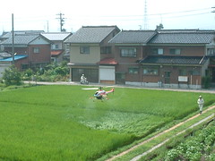 Japanese Rice Farmers Use Remote-Control Helicopters to Spray Crops
