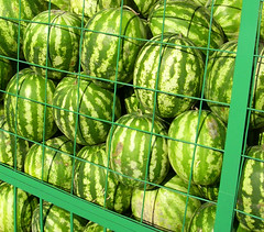 dangerous watermelons