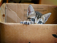 Cat in the box! (fofurasfelinas) Tags: baby topf25 cat kitten remember tabby kitty chihiro fofurasfelinas catphotography ccc43 felinephotography gianeportal furryfelines fotografiadegatos fotografiafelina