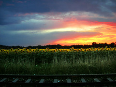 lost railway (Cilest) Tags: 2005 blue sky orange flower nature clouds train wow dawn austria cilest dusk topc75 railway august unfound sunflower fields wildflower sigi excellenceinlandscape utatafeature