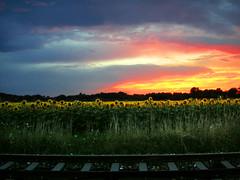lost railway (Cilest) Tags: 2005 blue sky orange flower nature clouds train wow dawn austria cilest dusk topc75 railway august unfound sunflower fields wildflower sigi excellenceinlandscape utatafeature