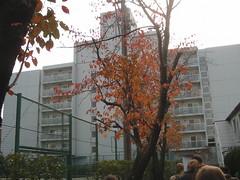 IMG_0608 (cmetom) Tags: sony dormitory atsugi