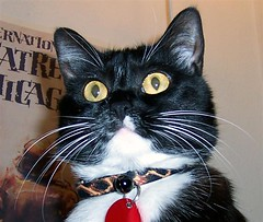 julieface (melhope) Tags: julie cat cats cute cuteness