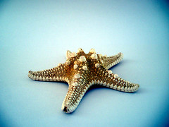 ocean  colour  scene #1 (macca) Tags: starfish blue sealife star white