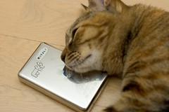 DSC_4485 (junku) Tags: cats cat nikon kitten ipod d70 kitties  kin