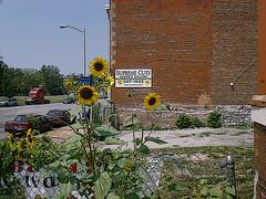 sunflowers on Delmar poster (MBK (Marjie)) Tags: stlouis posterized saintlouis missouri mbk