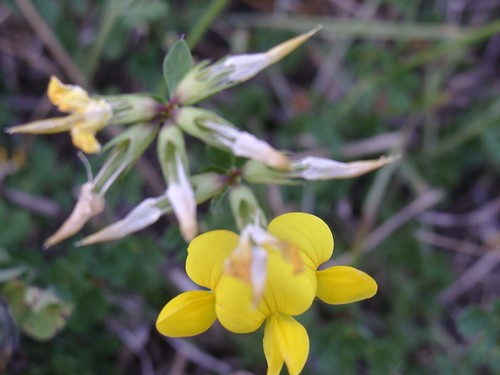 Tiny Ground Flowers