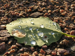 the water on a leaf