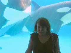 captive orcas