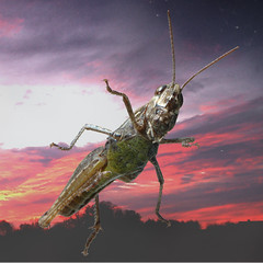 Curious (PeterKvG) Tags: 2005 sunset red sky 15fav deleteme macro window nature topv111 510fav wow bug top20favorites purple d70 deleteme10 scifi getty peep top20macro iridescence hopper seethru grashopper peterkvg