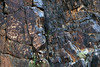 Petroglyphs Of Bichigt Khad (MykReeve) Tags: mongolia gobidesert gobi petroglyphs bichigtkhad rock desert bayanmountainrange