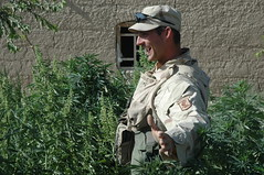 Happy face! (thirstycactus) Tags: afghanistan marijuana pot
