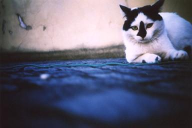 the [k] cat